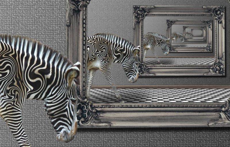 Zebra schwarz weiß vor Bilderrahmen